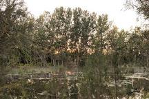 Warriewood Wetlands, Warriewood, Australia