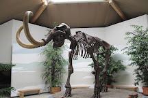 Sudostbayerisches Naturkunde- und Mammut-Museum Siegsdorf, Siegsdorf, Germany