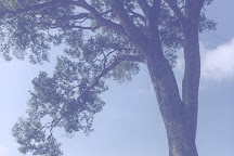 One Tree Stop, Kathmandu, Nepal