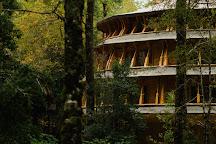 Huilo Huilo Reserva Biologica, Los Rios Region, Chile