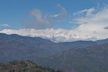 Tea Garden, Darjeeling, India