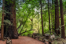 Henry Cowell Redwoods State Park, Felton, United States