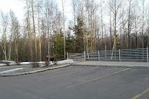 University Lake Dog Park, Anchorage, United States