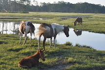 Saltwater Pony Tours, Chincoteague Island, United States