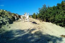 Parc Animalier De Lussas, Lussas, France