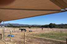 Alpha Equestrian, Simondium, South Africa