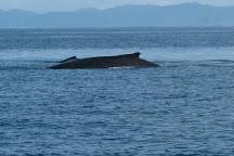 Sea Bird Sailing Excursions, Playas del Coco, Costa Rica