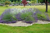 Castle Rock Lavender, Castle Rock, United States