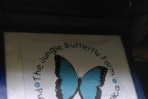 Jungle Butterfly Farm, Nandayure, Costa Rica