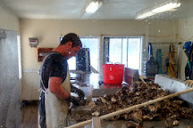 Oregon Oyster Farms, Newport, United States