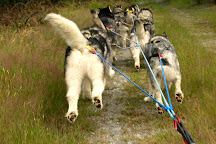 Real Dog Adventures NZ, Ranfurly, New Zealand