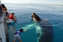 Blue Dolphin Marine Tours, Urangan, Australia