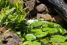 McBryde Garden, Poipu, United States