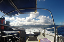 One Ocean Diving, Haleiwa, United States