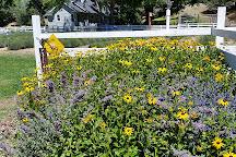 Lavender Fields Forever, Jacksonville, United States