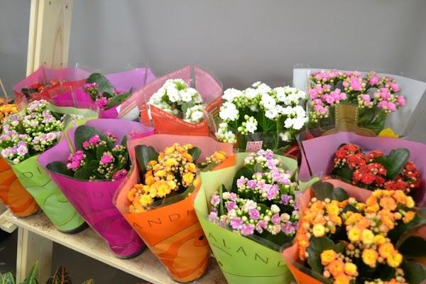 Оптовая продажа цветов в сыктывкаре, букет желаний