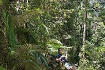 Forest Flying, Finch Hatton, Australia