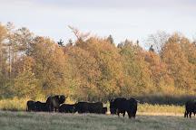 Nationaal Park Drents-Friese Wold, Appelscha, The Netherlands