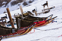 Grizzle-T Dog & Sled Works, Steamboat Springs, United States