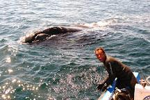 Aquatours Buceo, Puerto Madryn, Argentina