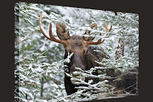 Moose Prints Gallery and Gifts, Millinocket, United States