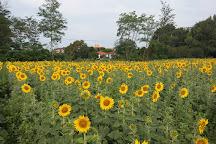 Parco Alto Milanese, Busto Arsizio, Italy