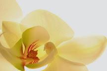 Orchid Day Spa, Melbourne, Australia