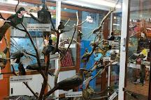 Shembaganur Museum of Natural History, Kodaikanal, India