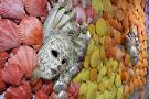 World Seashell Museum