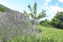 Farma Magaraca Martinici, Gradina, Montenegro