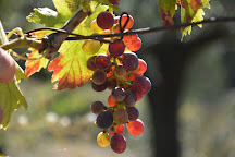 Grape Tours in Tuscany, Florence, Italy