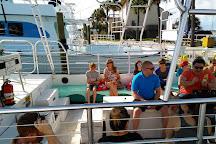 Premier Dolphin Cruise, Pensacola Beach, United States