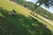 Safari Park, Pombia, Italy