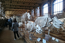 Museum d'Histoire Naturelle, Dijon, France
