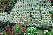 Neihu Flower Market, Neihu, Taiwan