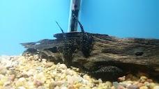Hobnob Pet denver USA