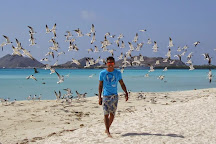 Madrisqui, Isla El Gran Roque, Venezuela