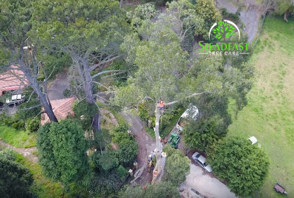 Crane tree removal being completed by Steadfast Tree Care Fredericksburg VA
