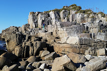Valdivian Coastal Reserve, Los Rios Region, Chile