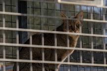 The Cat House, Rosamond, United States