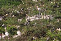 Uppalapadu Bird Sanctuary, Uppalapadu, India