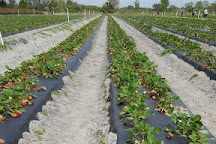 Pappy's Patch U-Pick Strawberries, Oviedo, United States