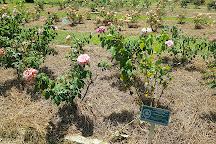 Edisto Memorial Gardens, Orangeburg, United States