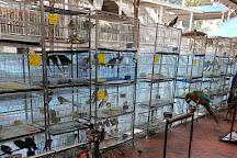 Goodwill Birds Trading, Singapore, Singapore