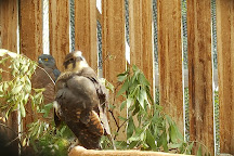 Raptor Refuge, Kettering, Australia