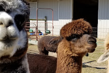 Bay Springs Farm Alpacas, Cape May, United States