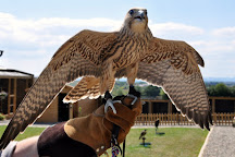 Battlefield Falconry Centre, Shrewsbury, United Kingdom