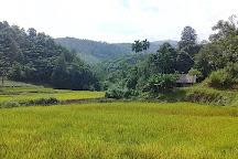 Xuan Son National Park, Xuan Dai, Vietnam