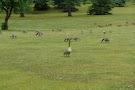 Rundle Park