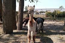 Gibraltar Bay Alpaca Farm, Grosse Ile, United States